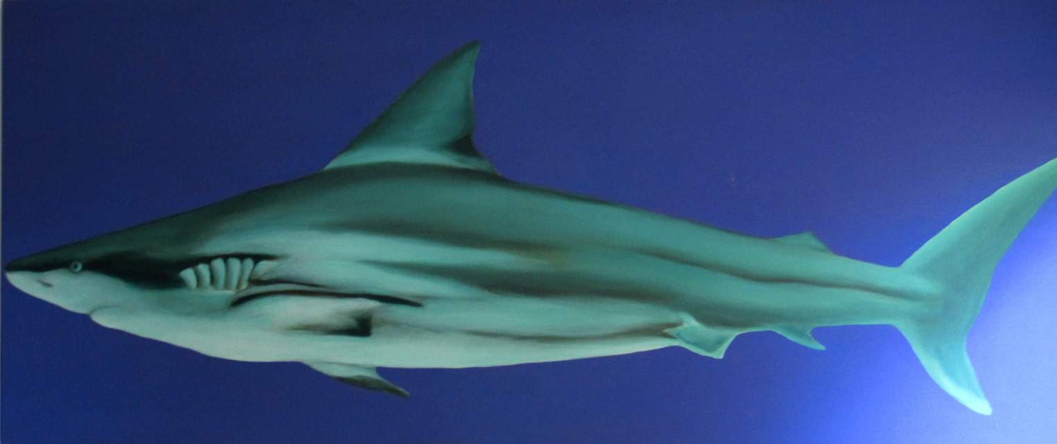 Common Ground 1 Diptych Shark by Sheena Vallely