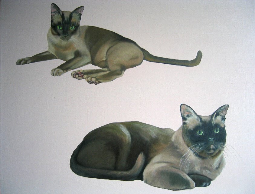Siamese by Sheena Vallely