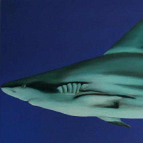 Common Ground 1 Diptych Shark